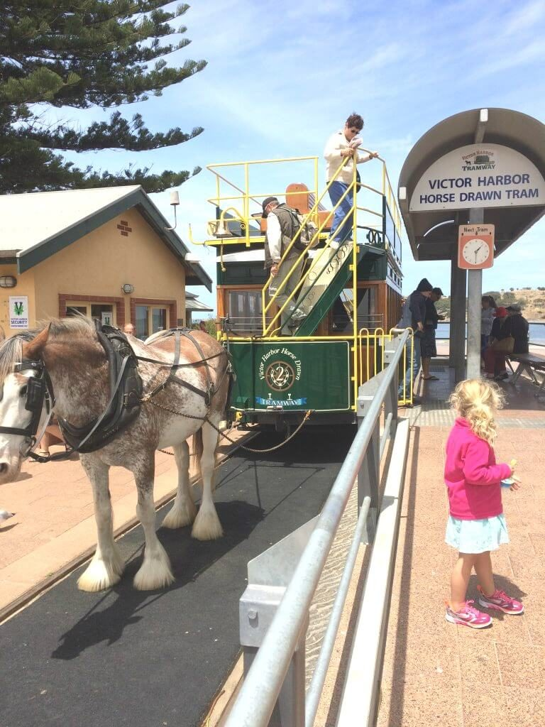 Things To Do In Adelaide For Kids, Victor Harbour horse drawn tram