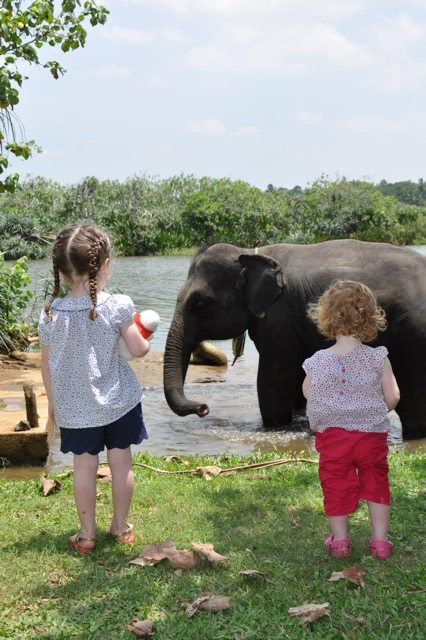 Sri Lanka With Kids (Galle), Family trip, Sri Lanka, Destination sri lanka ,family, travel, elephant, children,