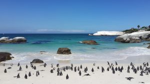 Cape town, top 5 winter sun family holiday,Top 5 Winter Sun Holiday Destinations For Families, boulder beach, penguins