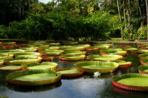 SSR Botanic Garden in Pamplemousse, Mauritius is a very beautiful 60 acre garden attraction. Explore giant lilies, meet deer and tortoises. Be sure to bring water and snacks as the cafe is outside the park. As it is so vast a stroller would be needed for younger children.