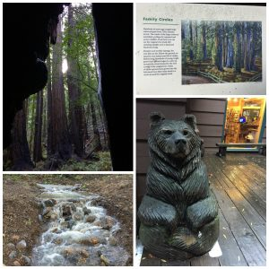 San Francisco With Kids. San Francisco With Kids: Kid Friendly Attractions in San Francisco for 2017. Up to date indoor and outdoor activities for children of all ages. Muir woods