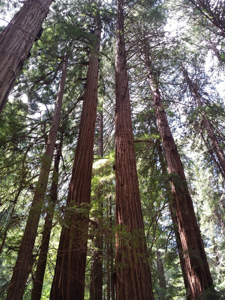 Things To Do in San Francisco With Kids, Muir Woods