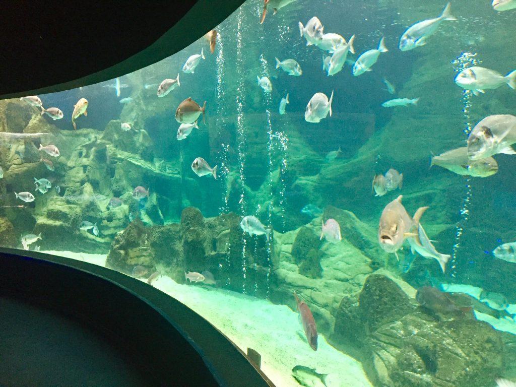 crete aquarium, hersonissos