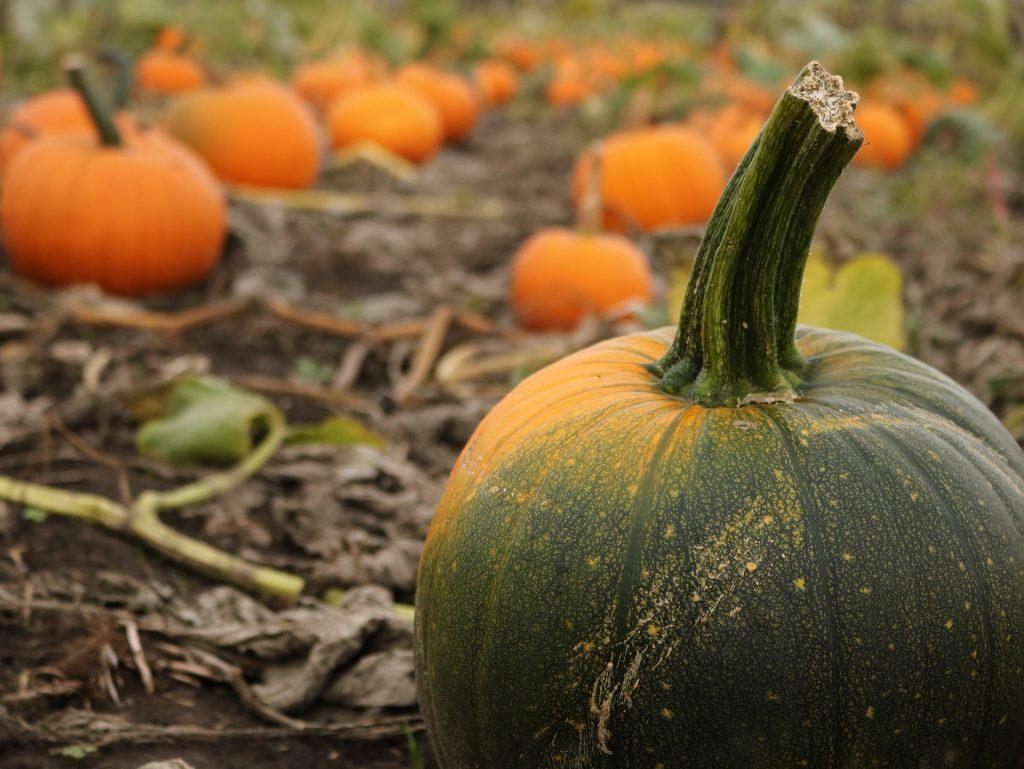 halloween activities in cambridgeshire, lincolnshire