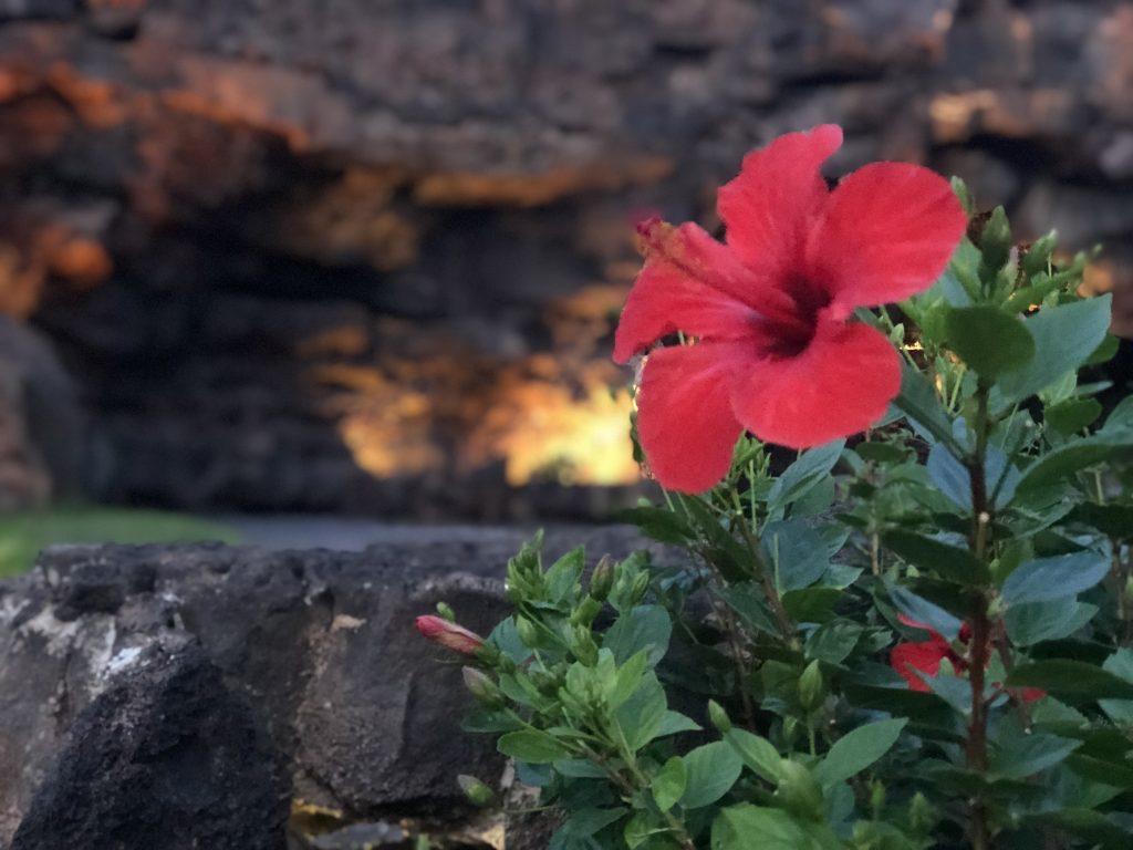 Lanzarote Family Holiday Tips: Top Things To Do With Kids In Lanzarote Los James del Aqua