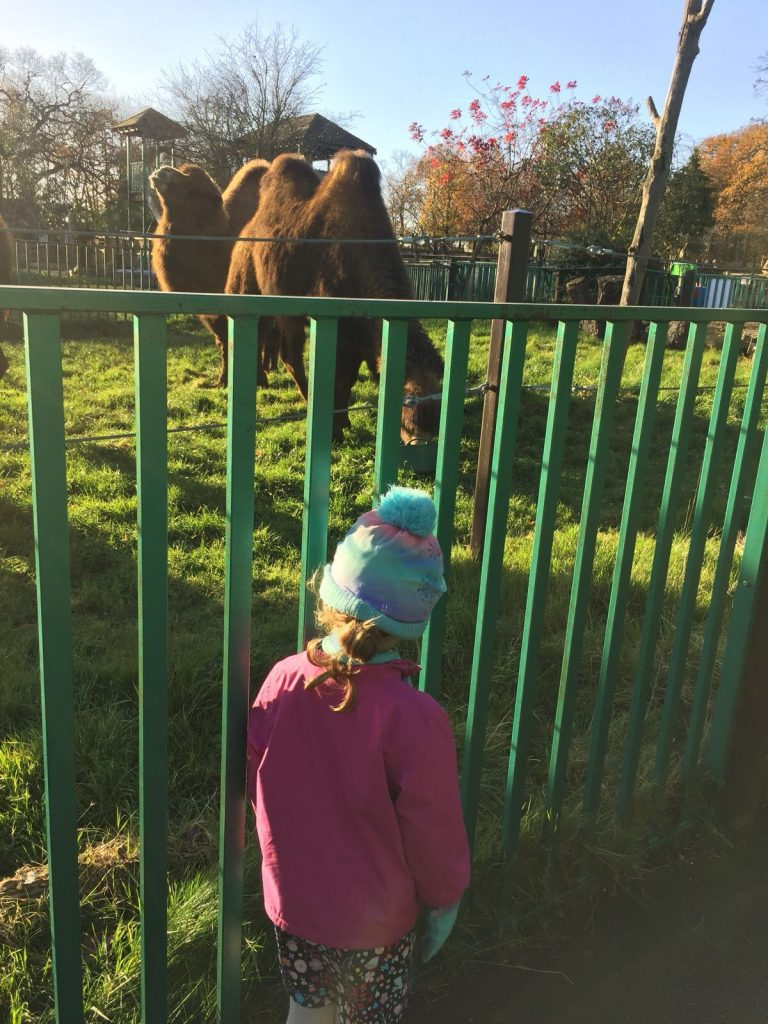 Paradise Wildlife Park Review