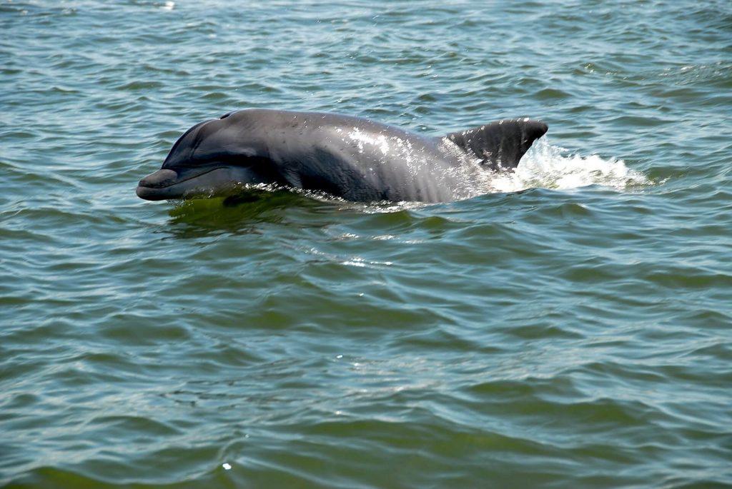 wild dolphin, luxury family travel