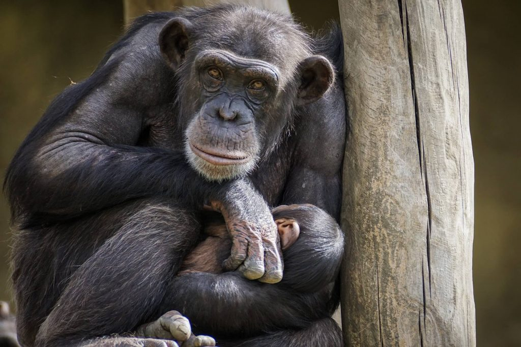 monkey world Dorset, things to do with kids near Peppa Pig World