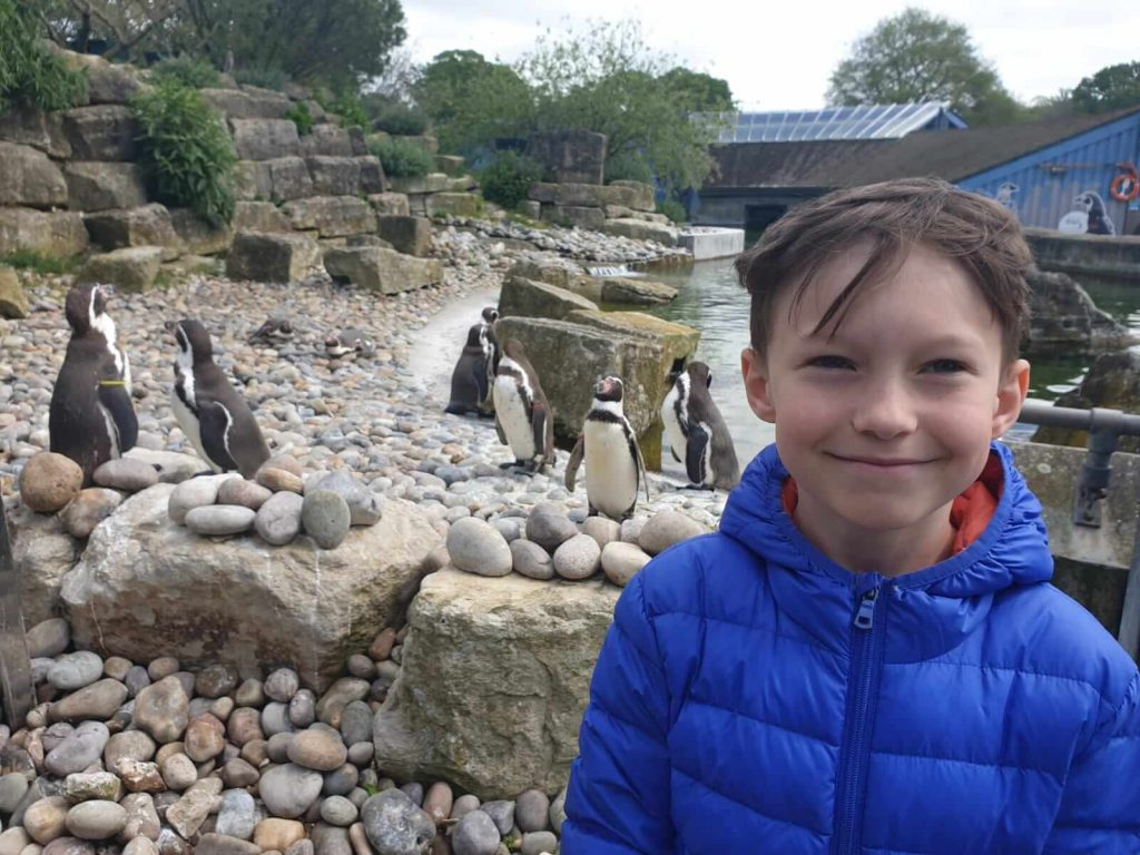 Things to Do with Kids in Hampshire  Marwell Zoo | Brickosaurs, penguins