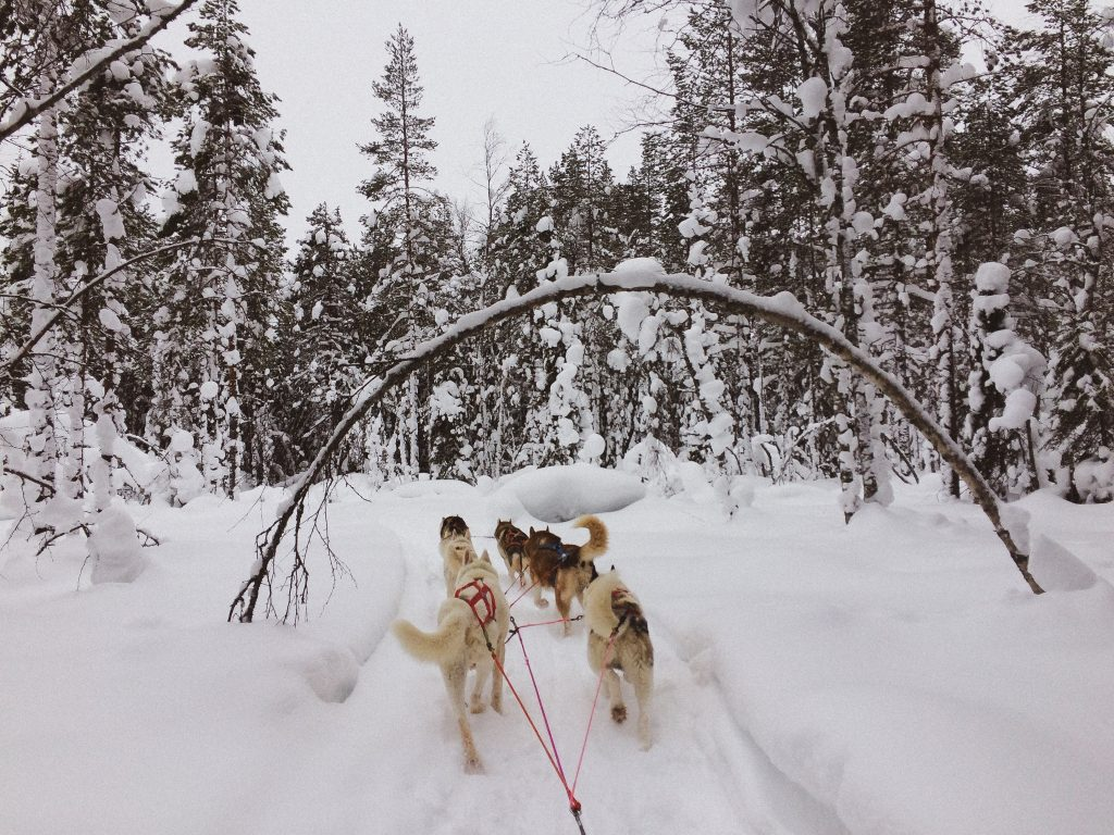dog sledding in northern Sweden