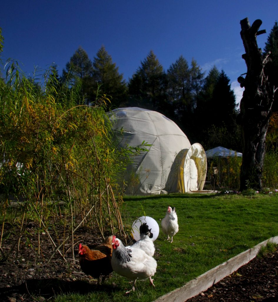 Glamping With Kids in the Forest of Dean. Collect eggs at Dome Garden glamping site. Copyright Dome Garden