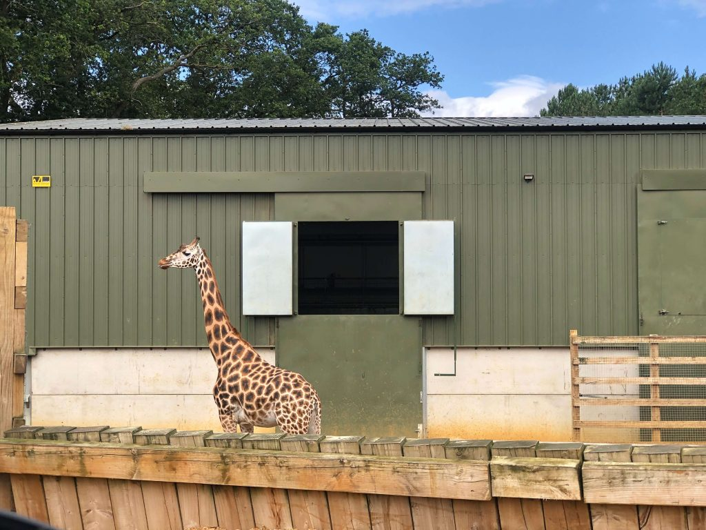 Woburn Safari Park is a great outdoor space in Bedfordshire for kids